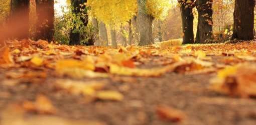 Arriva l'autunno. Ecco gli integratori per affrontarlo