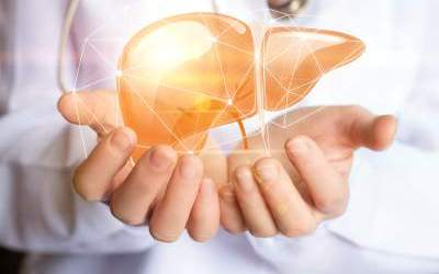 Silimarina e terapie dietetiche nelle epatopatie non alcoliche