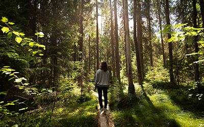 Oli essenziali e terapia forestale
