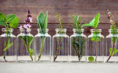Composti vegetali bioattivi contro gli agenti patogeni clinicamente importanti