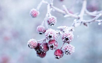 Inverno: quali sono gli integratori per affrontarlo al meglio?