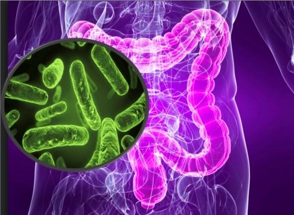 Webinar – L'importanza del Microbiota per la nostra salute. L'integrazione è una soluzione?