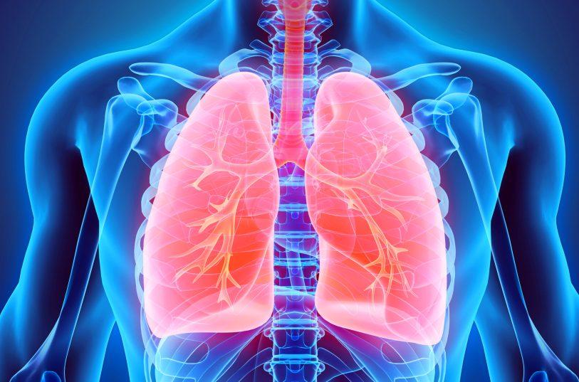 Probiotici, benefici anche per i polmoni e il sistema respiratorio